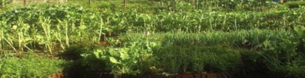 YWAM Organic Agri-nutrition Trainers School